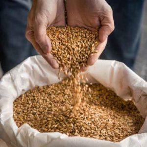, Beer | Malt processing system