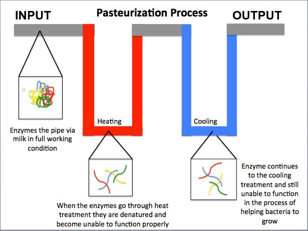 , Beer | Pasteurization equipment