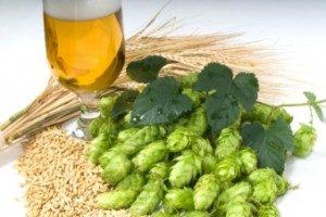 utvinning av humle, öl | Humle extraktion