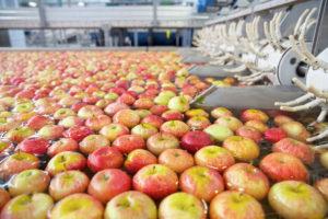 , Fruitmanipulatie-apparatuur